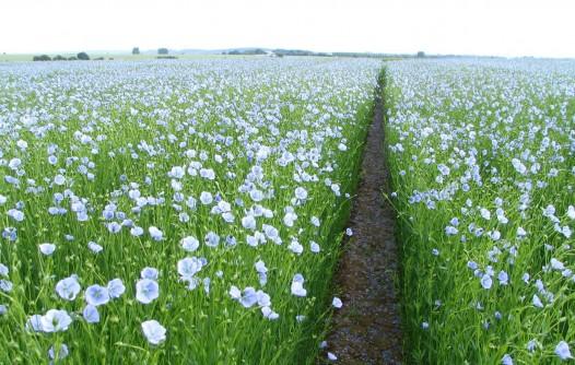 Planta con flores blancas Descripción generada automáticamente